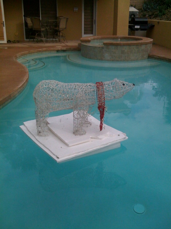 polar-bear-pool