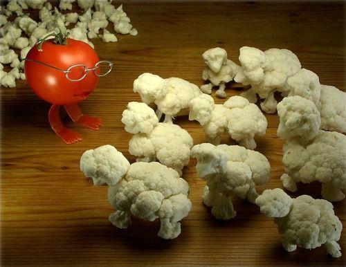 sheep-teacher