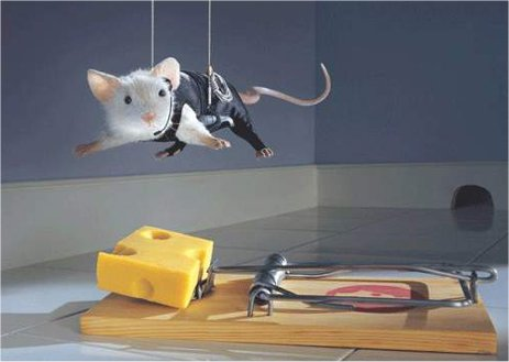 mousetrap matrix