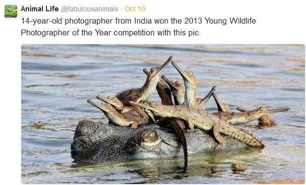 wildlife gators