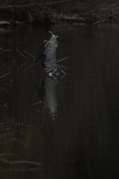 fbaker heron fishing line